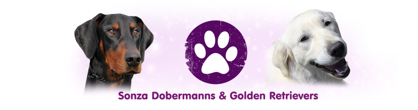 Sonza Dobermanns & Golden Retrievers